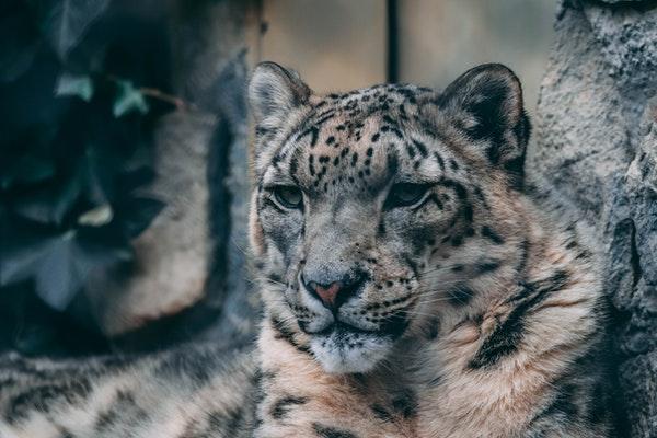 动保组织吁抵制动物商演