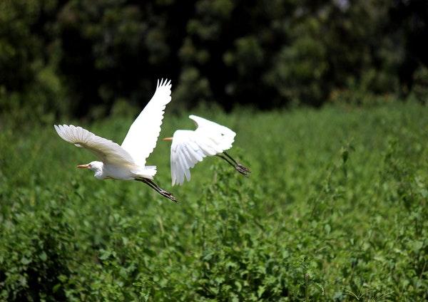 坚守二十年,污染湿地变回鸟类天堂