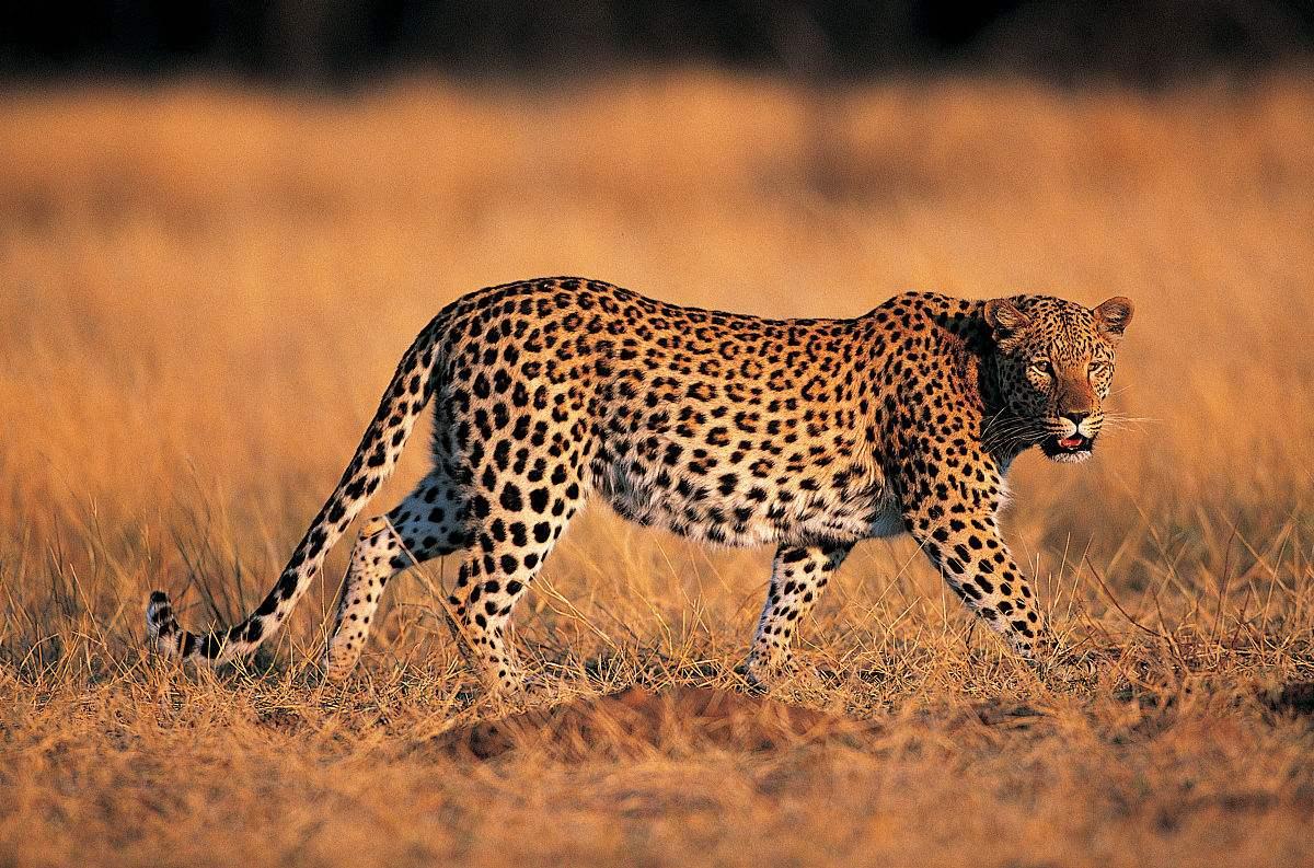 专家齐聚探讨虎豹保护之路