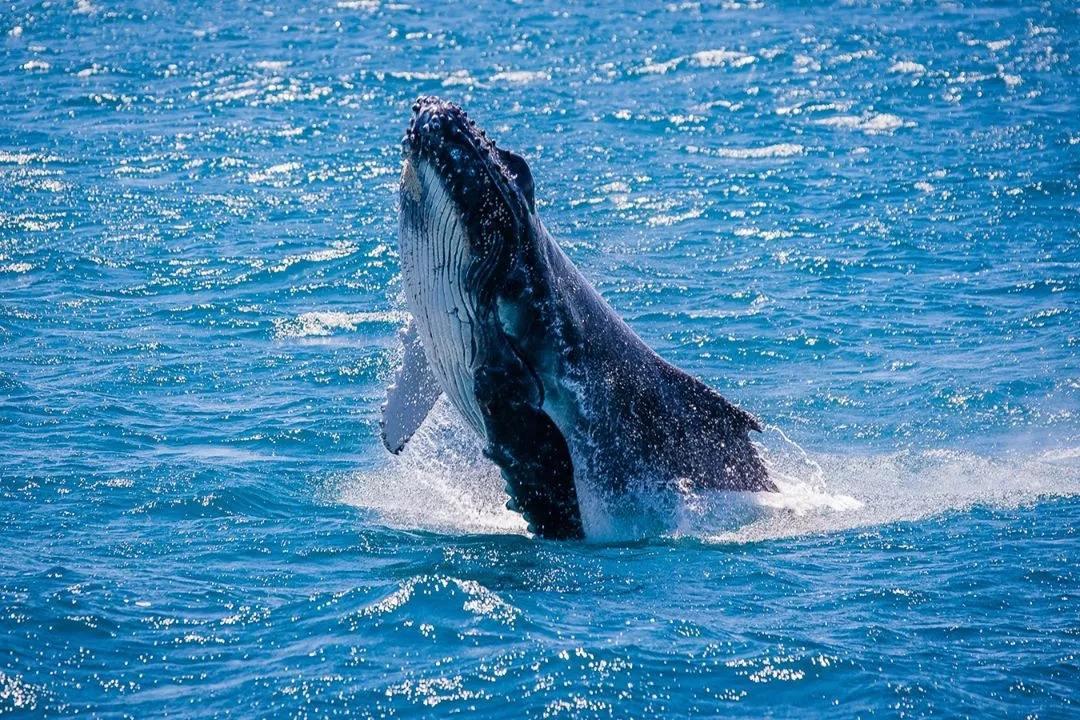 """鲸鱼""""被迫集体自杀""""背后的无奈"""